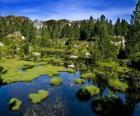 Pond Carlit