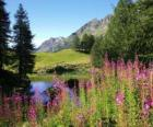 A lake in the foreground flowers and high mountain office