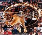 Tiger leaping inside a circle of fire