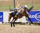 Cowboy riding a rearing horse in a rodeo