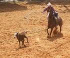 Cowboy riding a horse and catching a head of cattle with the lasso
