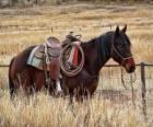 Horse of a cowboy