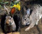rabbit in its burrow