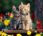 two cats with necklace