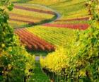 autumn landscape in the Vineyard