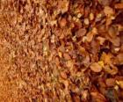 Fallen leaves on the ground, a typical image of autumn