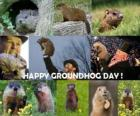 The Groundhog Day is a holiday which is celebrate in the USA and canada on February 2