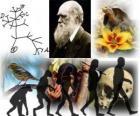 Darwin Day, Charles Darwin was born on february 12, 1809. Darwin tree, the first scheme of his evolution theory