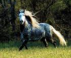 Lovely horse with long mane and long tail