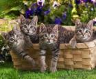 Four kittens in a basket