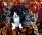 Cute kittens on Christmas Day