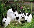 Family of rabbits