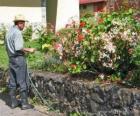 Gardener watering in spring