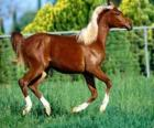 Elegant young horse
