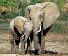 Mom controlling the little elephant with the help of her trunk