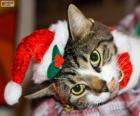 Cat with a Santa Claus hat