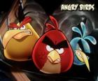 Other three birds from the videogame Angry Birds