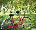 Tandem bicycle or twin. Tandem of two cyclists. Type of special bike with more seats and more pedals