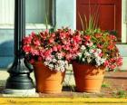Flowers in a pot or flowerpot