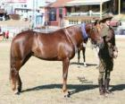Waler horse originating in Australia