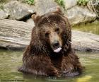 Big bear in the water