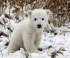 A small bear
