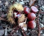Chestnuts, one of the typical fruits of autumn