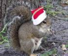 Squirrel with the hat of Santa Claus