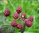 Blackberries fruit