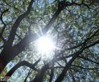 Branches and Sun