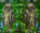 Two great horned owls