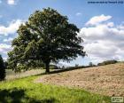 Tree in a plowed field
