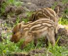 Offspring of wild boar