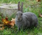 Curious and elegant grey rabbit in the garden