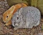 A couple of rabbits