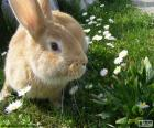 Rabbit in spring