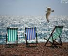 Chairs and gull