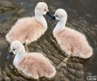 Three small swans