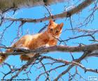 Cat on a branch