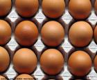 Eggs in the egg carton. Chicken eggs can be of various sizes, white and Brown depending on the breed of the hen