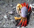 Crab colors