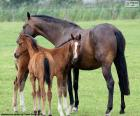 Mare with two foals