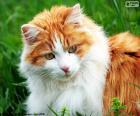 A elegant cat
