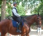 An agent of the London Metropolitan Police on horseback