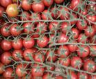 Tomato in branch