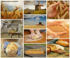 Collage of bread