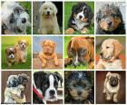 Fantastic collage consisting of twelve images of dogs