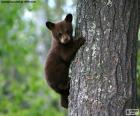Brown bear cub climbs a tree