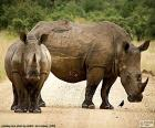 Two large rhinos in the middle of a road in the African savanna