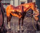 Wash a horse